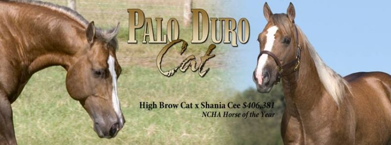Palo Duro Cat – REFERENCE SIRE